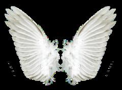 Angelclean (Ангел, ООО)