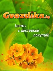 Трансстиль-Групп