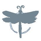 Cтудия Dragon-Fly