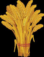 Русагро-Врн