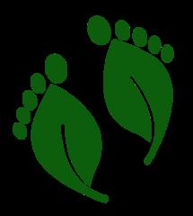 Детский эко-клуб ВерАлес