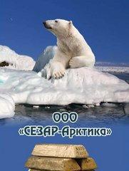 СЕЗАР-Арктика