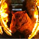 Из укротительницы тигров — в менеджеры по продажам. А кем вы хотели стать в детстве?