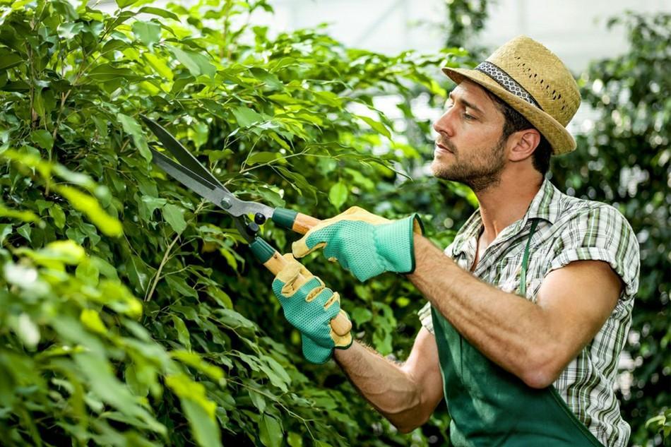 Отношение украинцев к сезонной работе: преимущества и недостатки