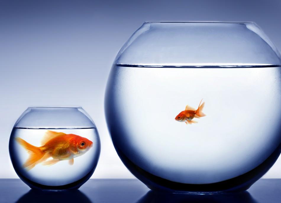 Работа в маленькой компании: плюсы и минусы