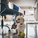 Звери на работе: как подготовить офис к присутствию питомцев